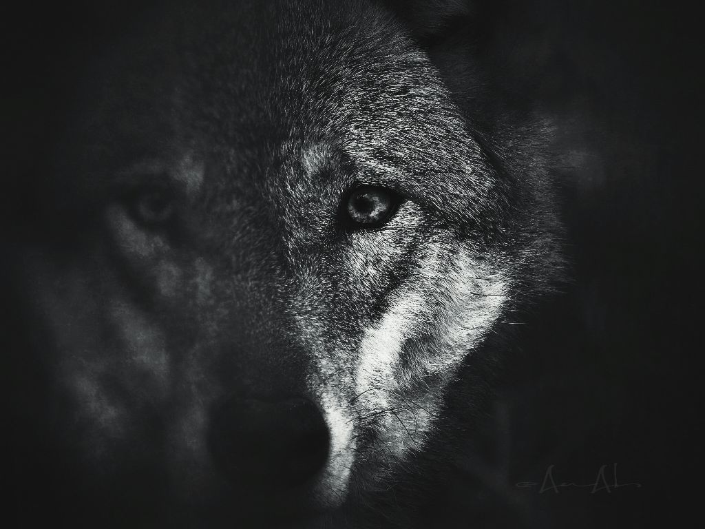 #depthoffield #petsandanimals #photography #closeup #wolf #mystic