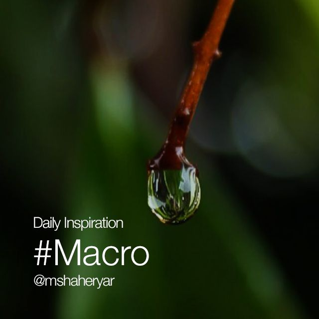 daily inspiration macro photos