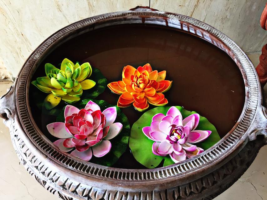 #lotusflowers #pond #flowers #iClicks